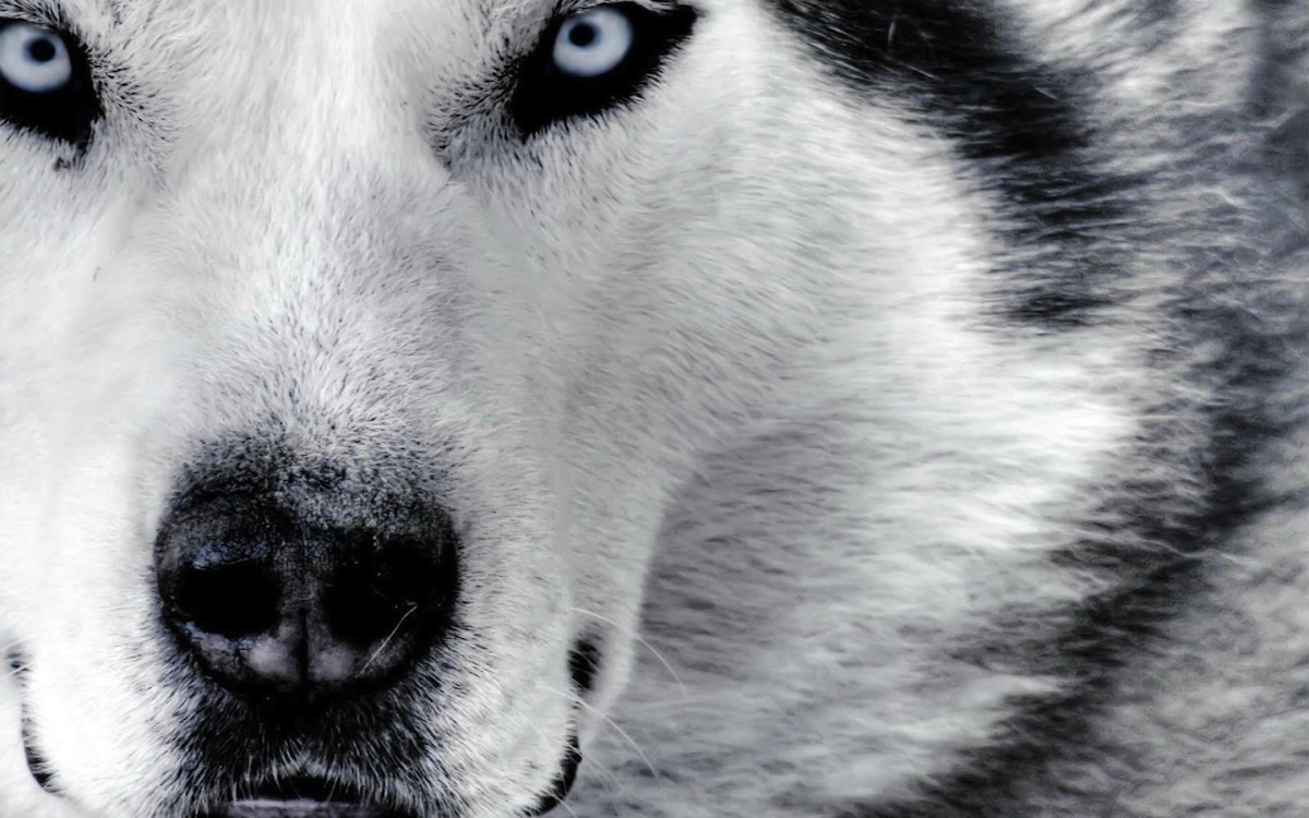 Image Result For A Wolf Tale