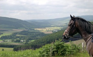 Horses-Head-and-Tweed-Trail