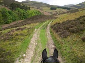 HorsesHead-and-Tweed-Trails
