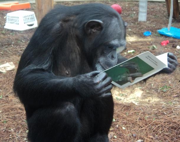 Reading Ape