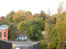 Colourful trees beyond the river