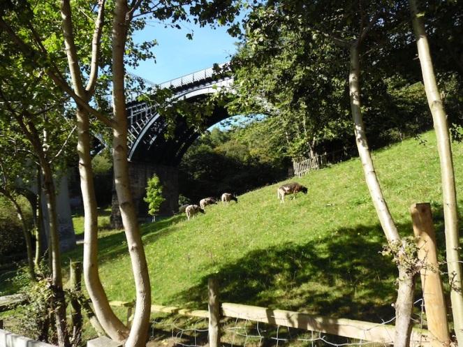 Goats graze under the railway bridge