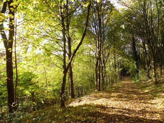 Orange path through trees