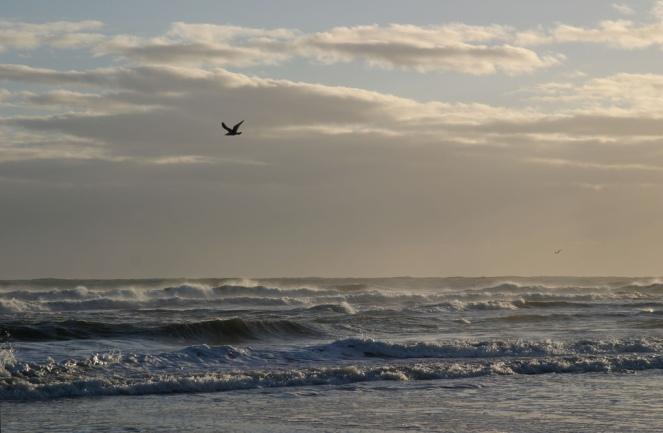 Tynemouth rough seas plus bird