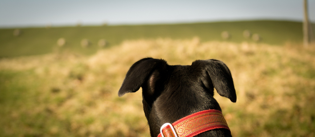Unreasonable Happiness: or How to Be aDog